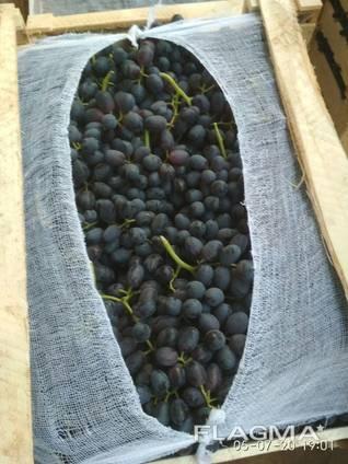 Виноград - кишмиш из Узбекистана