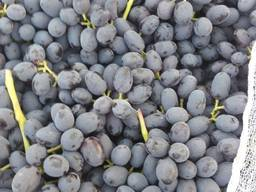 Виноград свежий Кишмиш