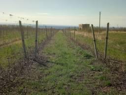 Виноградник в Украине - продажа готового бизнеса