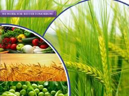 Пестицид. Виробник та постачальник пестицидів у всьому світі