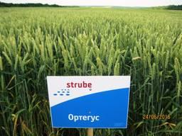 Високоякісна нова озима пшениця Ортегус (Штрубе, Німеччина)