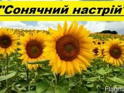 ВНІС Соняшникове насіння продам – «Сонячний настрій»
