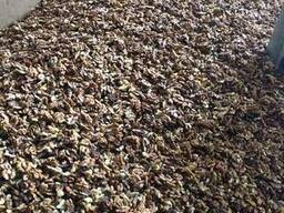 Волоський горiх оптом. Грецкий орех оптом урожай 2017 Walnut