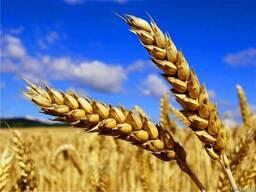 Все Производители Пшеницы — скидка более 50%