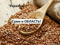 Куплю гречку Ивано-Франковск Украина