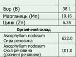 Вуксал Био Аскофол Wuxal Bio Ascofol - фото 2