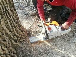 Выкорчевать дерево в Харькове
