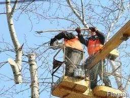Выкорчевка и спиливание деревьев.