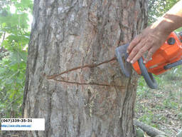 Вырубка деревьев, корчевание пней