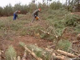 Вырубка леса зарослей расчистка участков Спил деревьев Киев