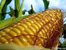 Фруктис семена кукурузы цена , Фруктис кукуруза купить
