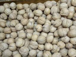 Walnuts / Грецкий орех / Ceviz / Ընկույզի / الجو