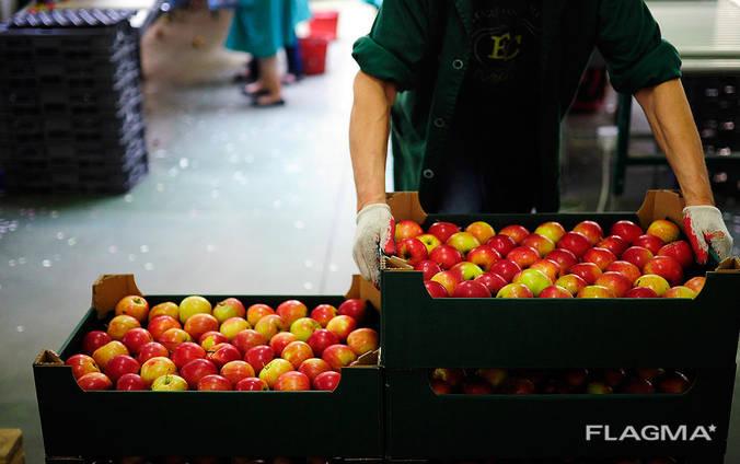 Яблоки из Польши
