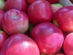 Яблоки Македония