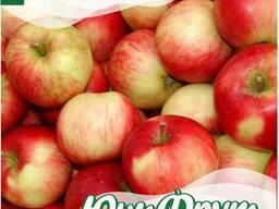 Яблоки на сок по хорошей цене