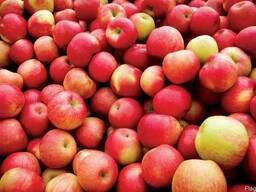 Яблоки опт от производителя Черновицкая область
