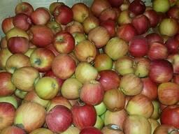 Яблоко 7 в окрасе оптом