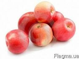 Яблоко оптом продам