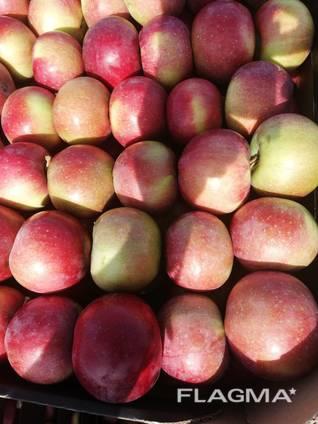 Яблоко производсво РБ
