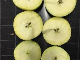 Яблоко закупка