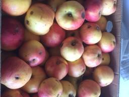 Яблука на переробку