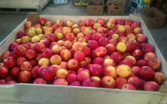 Товарне Яблуко зимових сортів