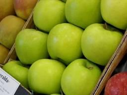 Яблуні. Саджанці яблуні каталог сортів Весна 2021