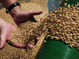 Ячмень, соя, пшеница, кукуруза - фото 1