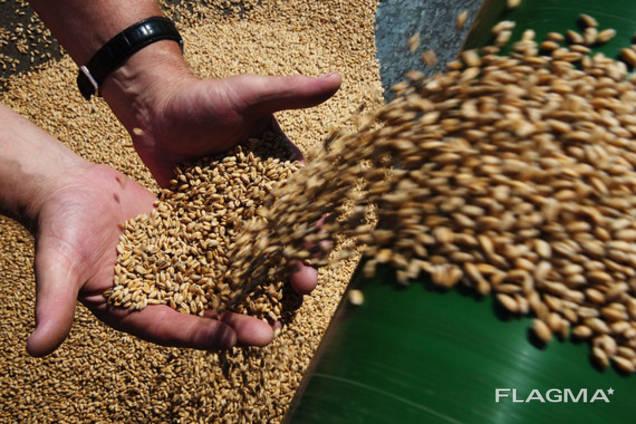 Ячмень, соя, пшеница, кукуруза