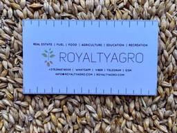 Ячмень, ячмень пивоваренный, пшеница продовольственная 3 класс