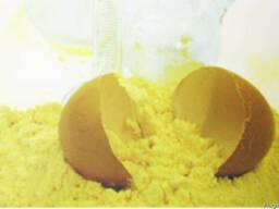 Овостар яичный порошок