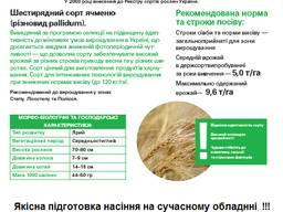 Якісне, сертифіковане насіння від виробника
