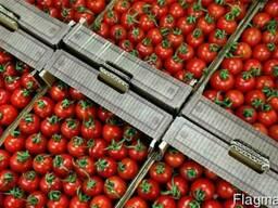 Ящики для огурцов и помидоров.