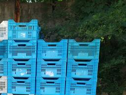 Ящики пластиковые (куриные)
