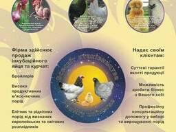 Яйца и цыплята бройлеров и других пород птиц