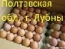 Яйца инкубационные бройлера