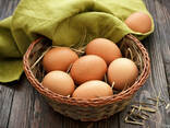 Яйцо диетическое, С1