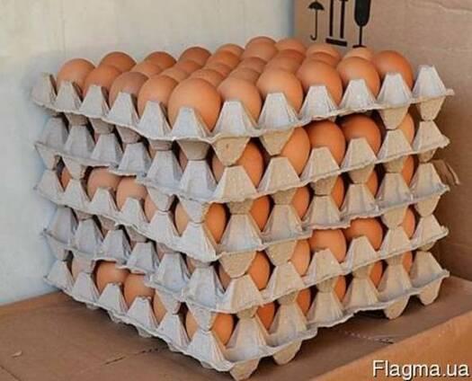 Яйцо от производителя