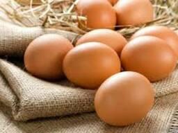 Яйцо столовое на экспорт