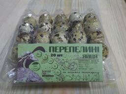 Яйця перепелині