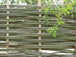 Забор из лози