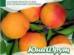 Закупаем абрикос для промышленной переработки