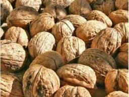 Закупаем грецкий орех, фасоль, семена тыквы