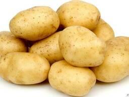 Закупаем картофель первого сорта с доставкой в Киев