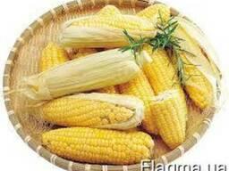 Закупаем кукурузу!