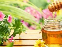 Закупаем мед