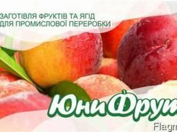 Закупаем персик для промышленной переработки