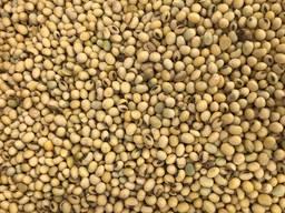 Закупаем проблемное некондиционное зерно пшеница, кукуруза, ячмень