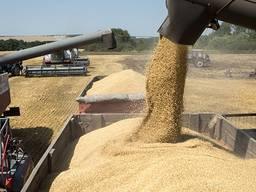 Закупаем пшеницу 2,3,4 кл.