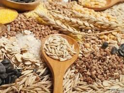 Закупаем с места зерновые и масличные культуры.